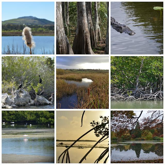 Different Wetland Habitats