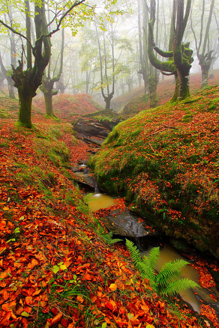 Red Forest, Cantabria - Spain