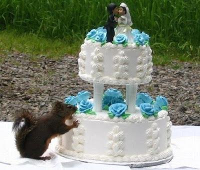 smiješne slike vjeverica gricka tortu
