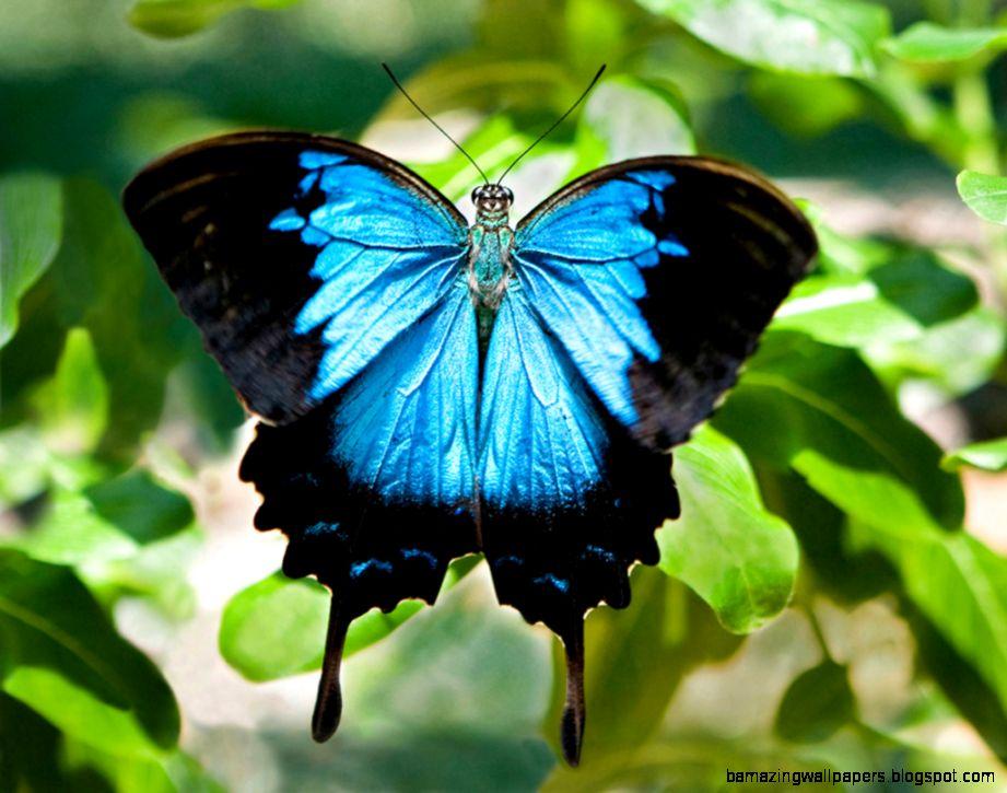 Cairns Botanic Gardens  Butterflies