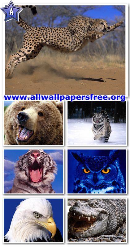 80 Amazing Wildlife Wallpapers 1280 X 1024 [Set 4]