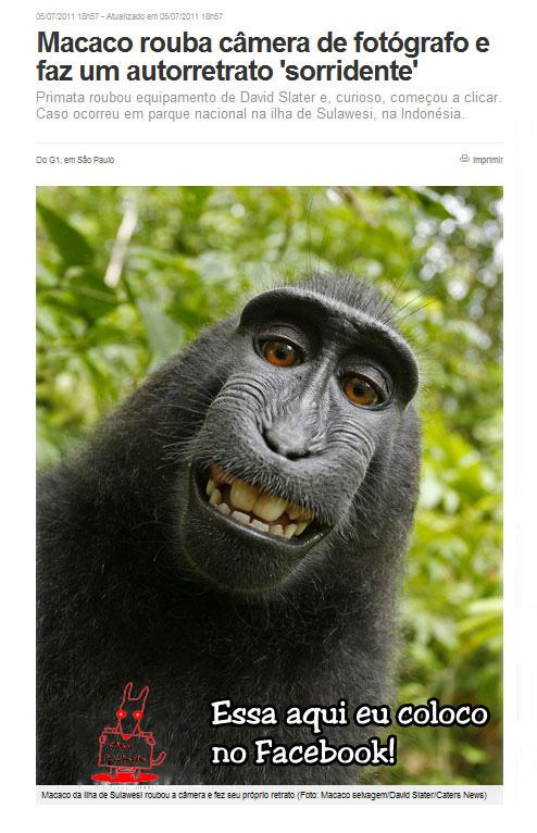 meme Macaco Fotografo