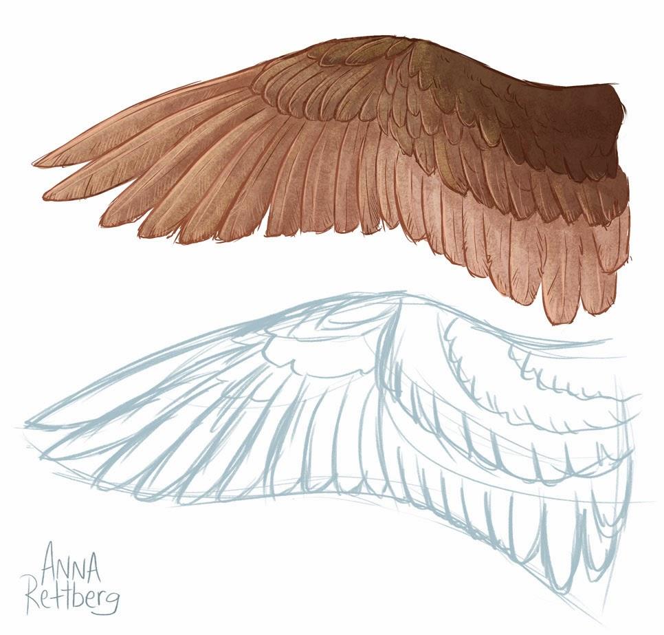Bird wings