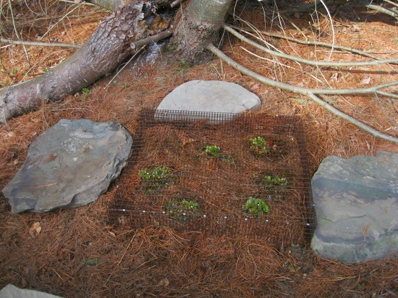 Plants and stones transplanting wild arbutus for Soil 1 year mba