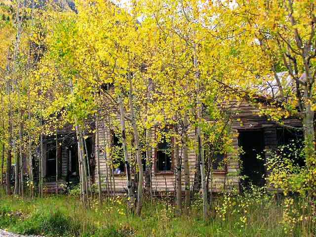 Aspens and Abandoned House