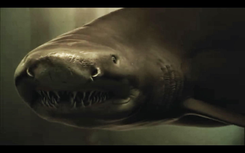 Sand tiger shark information amp pictures of sand tiger sharks - Movie Still Of Closeup Of Tiger Shark Face