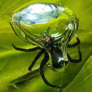 Laba-laba Lonceng