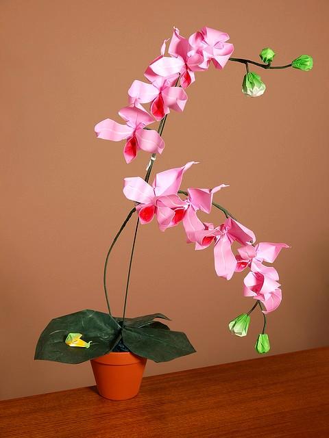 OrchidCraze: Wonderful Orchid Origami..