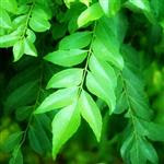 Bay leaves to treat diabetes