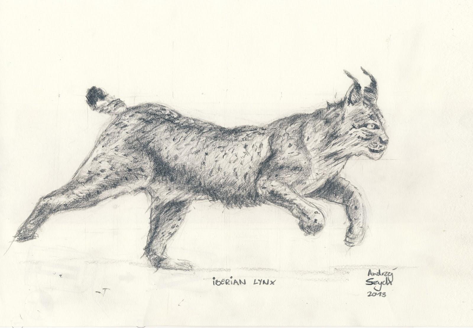 Iberian Lynx Drawing Lynx And Three Iberians