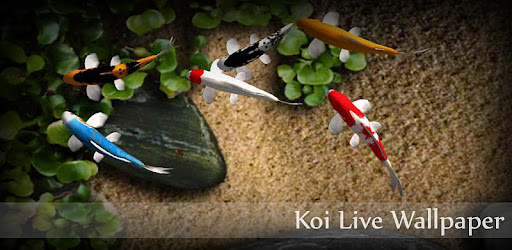 download Koi free Live Wallpaper 1.4 Apk untuk Android