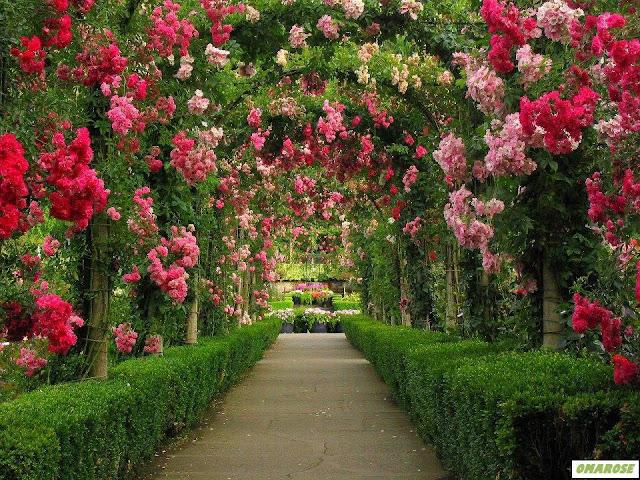 jardim maravilhoso - arco de rosas