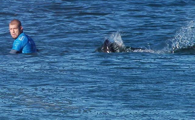 shark attack mick fanning 01