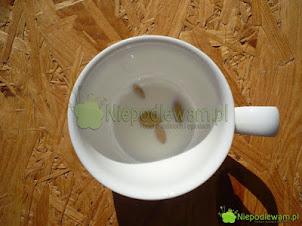 Moczenie nasion w mleku – czy potrzebne przed siewem