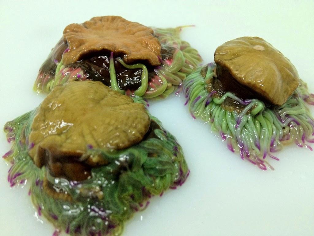 Plantas flores y vida las algas ix alga tengusa for Cocinar ortiguillas