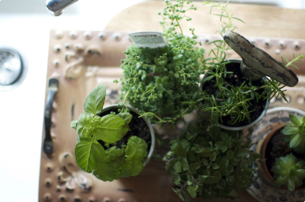 sarahkatebranine: Our mobile herb + succulent garden.