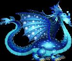 dragon plancton adulto