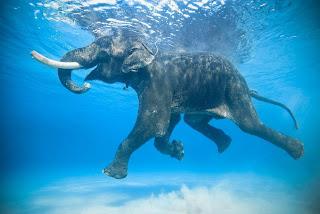 صورة مدهشة فى البحر