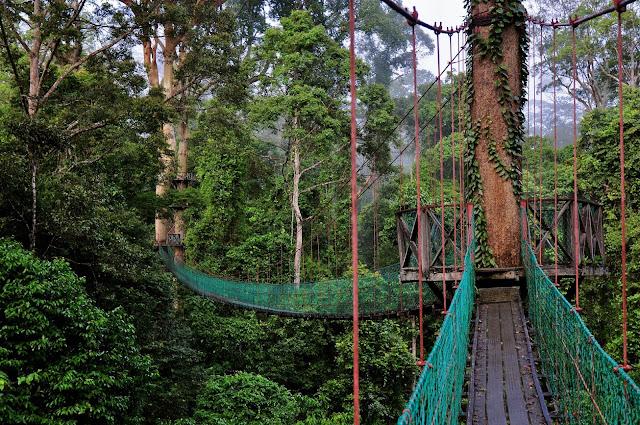 Danum-Valley-Malaysia-Canopy-Walk