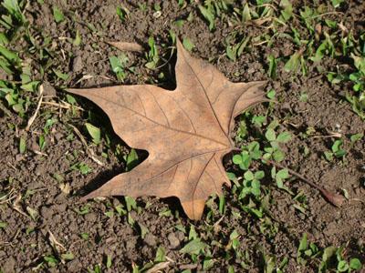 compostagem, horta e educação ambiental