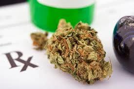 cannabis medicinal contra câncer