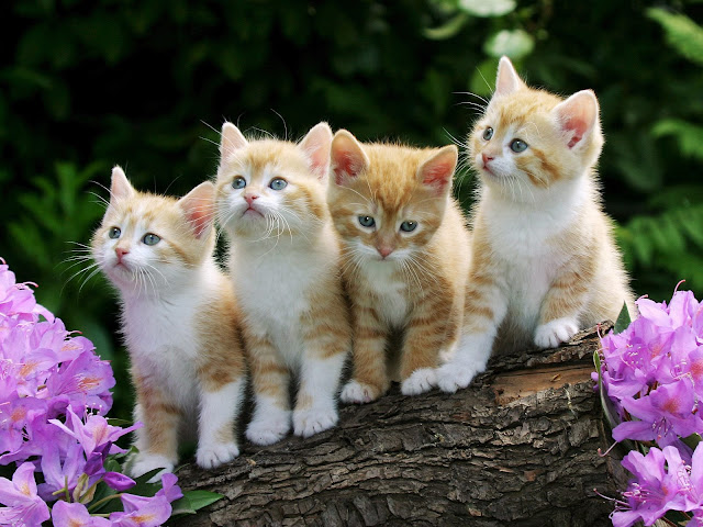 wallpapers of cats and kittens