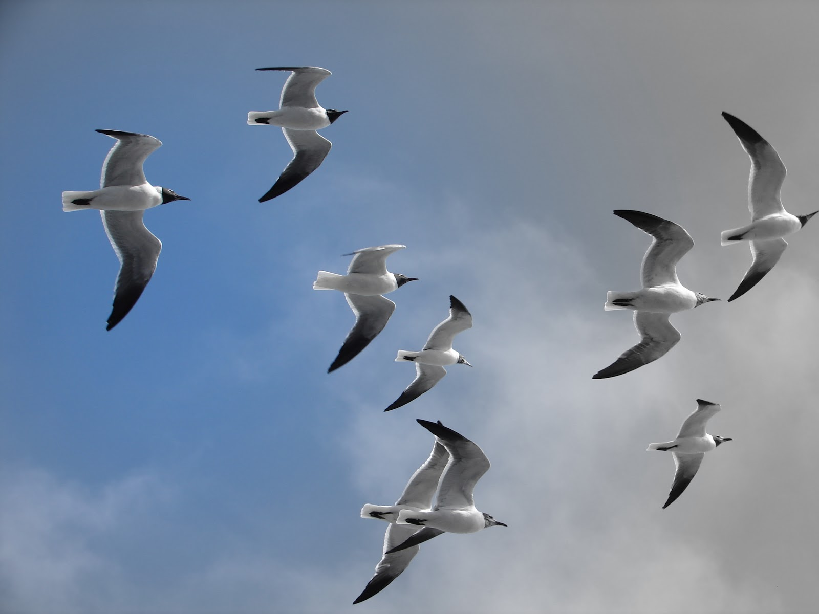 1000 Images About Birds In Flight On Pinterest Swallow