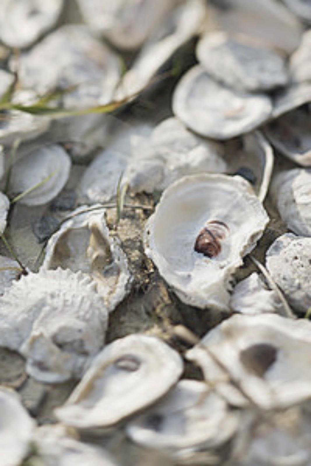 feasibility of oyster shell as cement Sea shell was used as admixture in concrete buscar  partitura 661 vistas 1 votos positivos, marcar como útil 0 votos negativos, marcar como no útil feasibility of using sea shells ash as admixtures for concrete cargado por guru raj sivaprakasam sea shell was used as admixture in concrete guardar  feasibility of using sea shells.