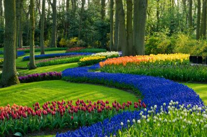 BJ Ambis Landscaping