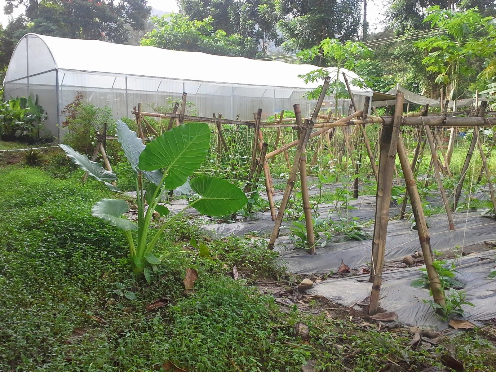 Desde mi huerto semillas ecol gicas 2014 for Como hacer una mesa de cultivo casera