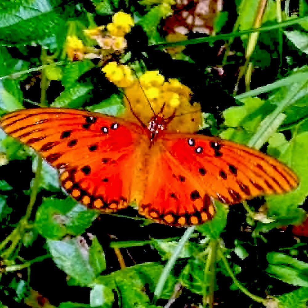 Orange Butterfly