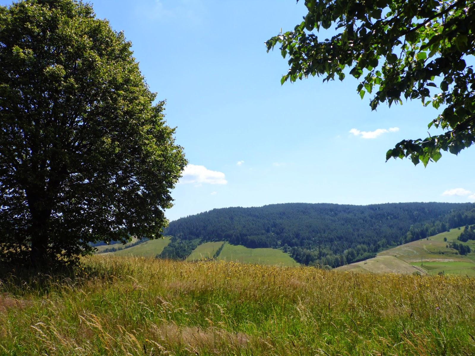 Wiejski krajobraz pomiędzy Muszyną a Jaworzyną Krynicką
