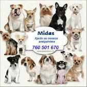 A tua chamada é a tua contribuição para ajudar animais abandonados