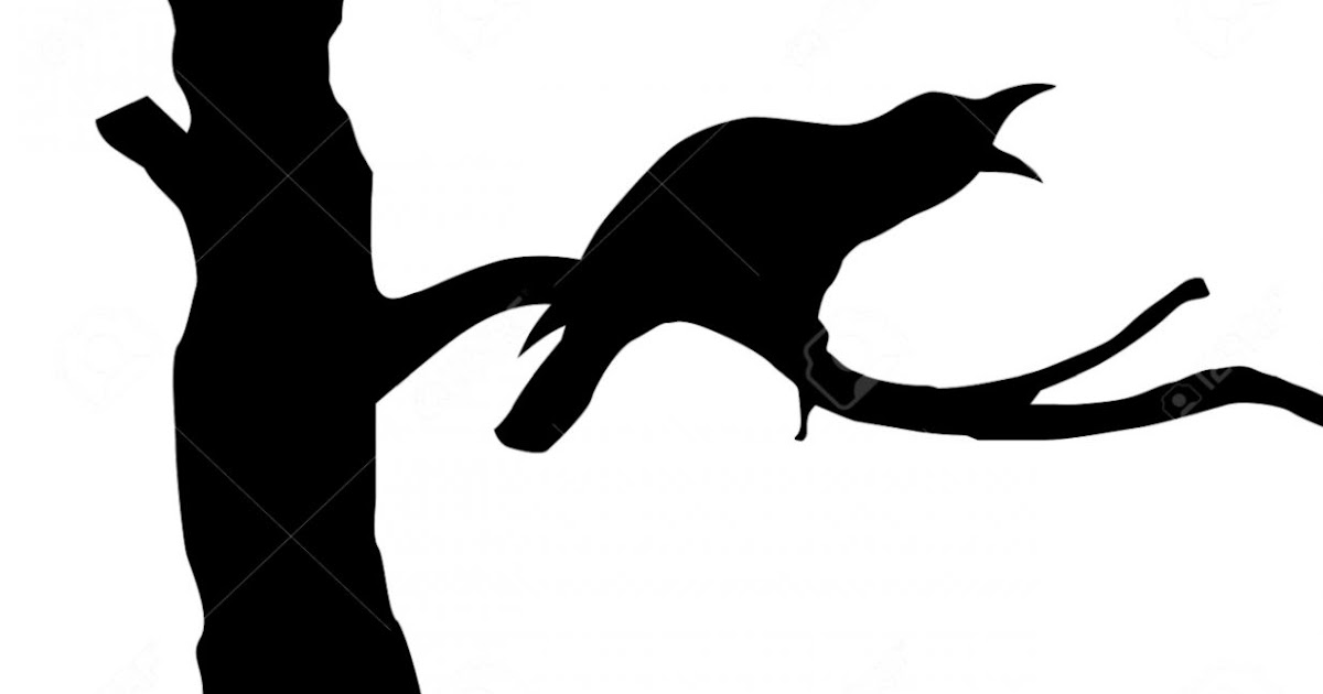 Crow On Branch Silhouette   Amazing Wallpapers