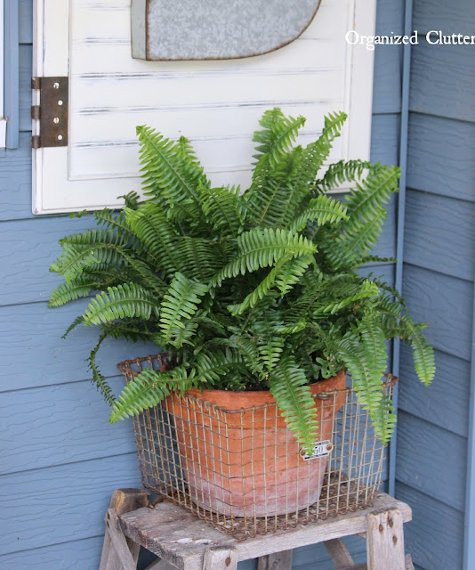 Boston Fern in a Gym Basket www.organizeclutter.net