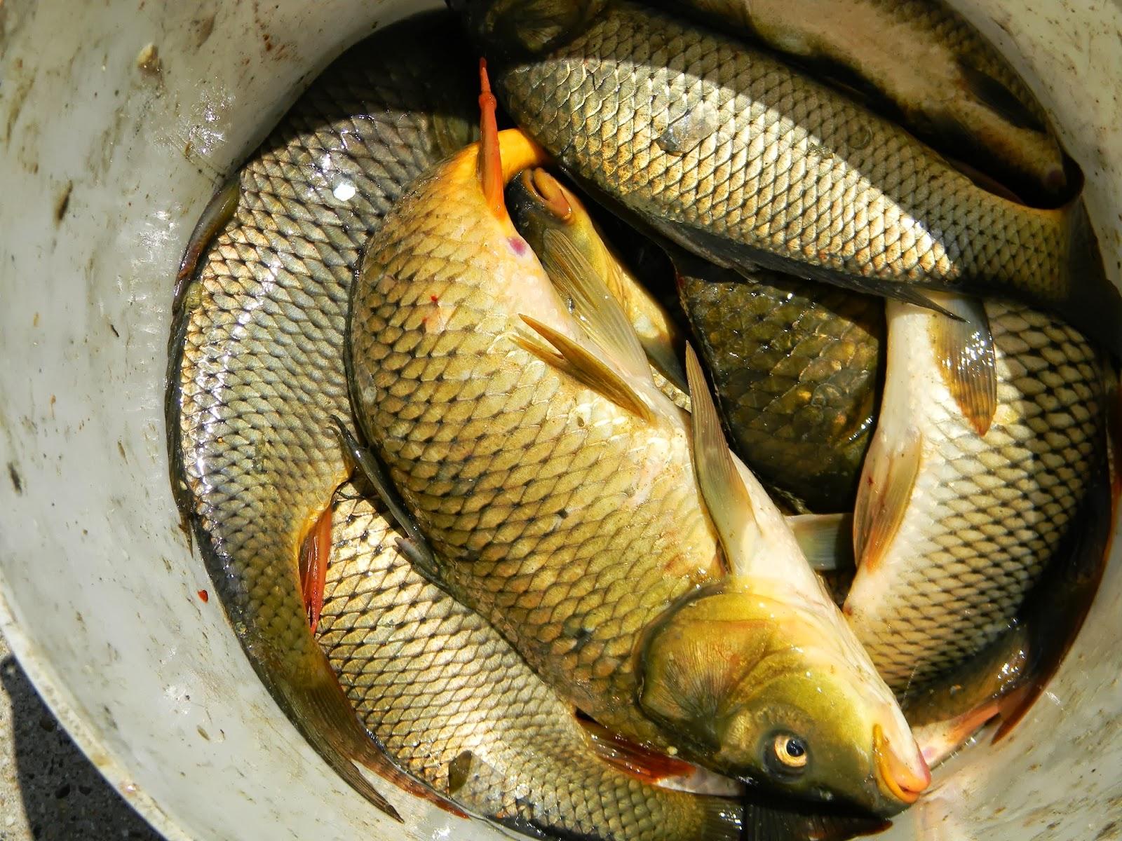 рыбалка в крыму города