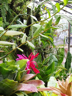 Glimpse of red among plants in the greenhouse