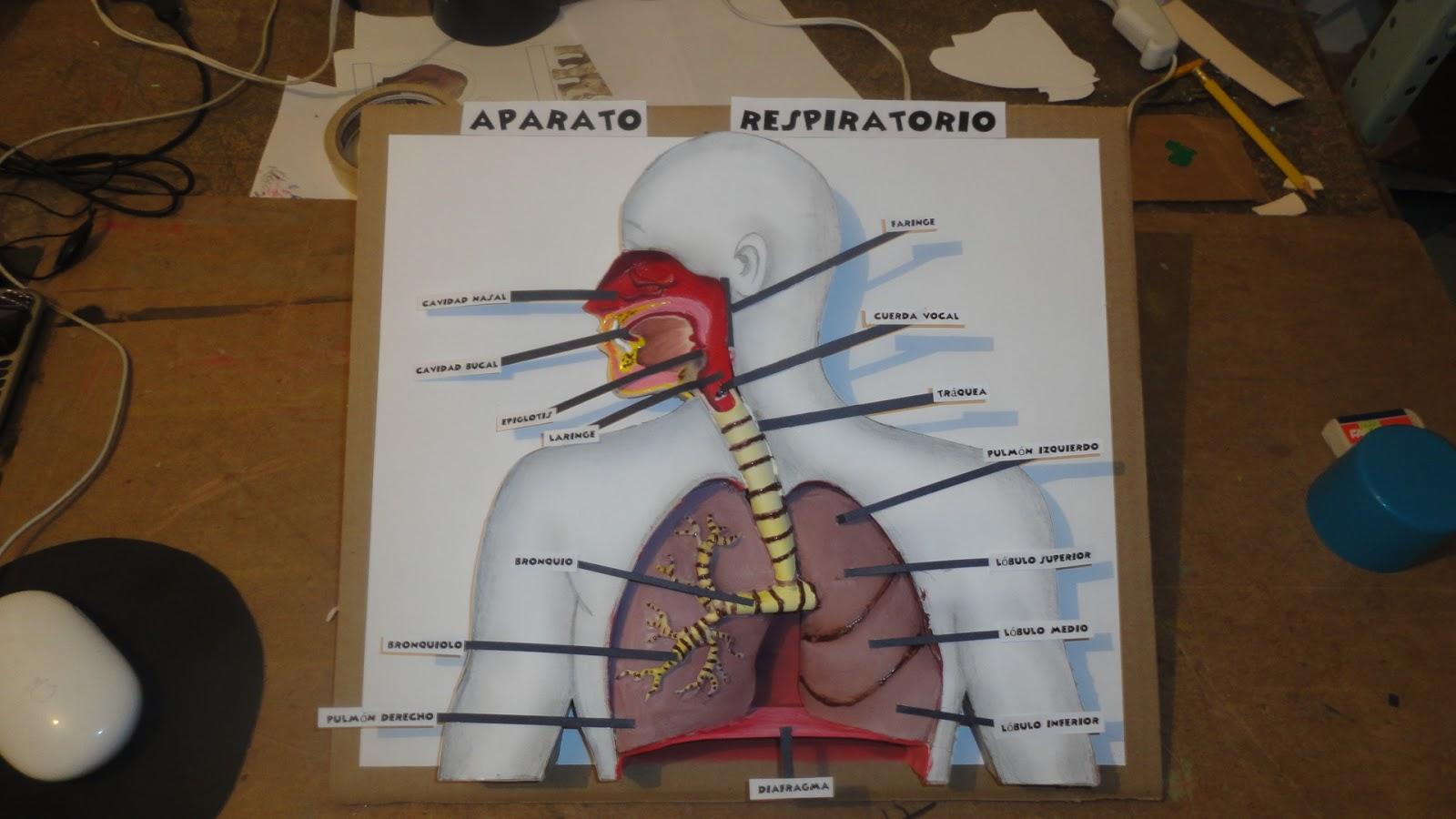 maquetas dibujos y dise os maquetas cuerpo humano body