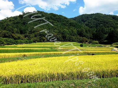 Paddy fields in Shugakuin Villa