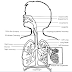 Acute Respiratory Failure Case Study