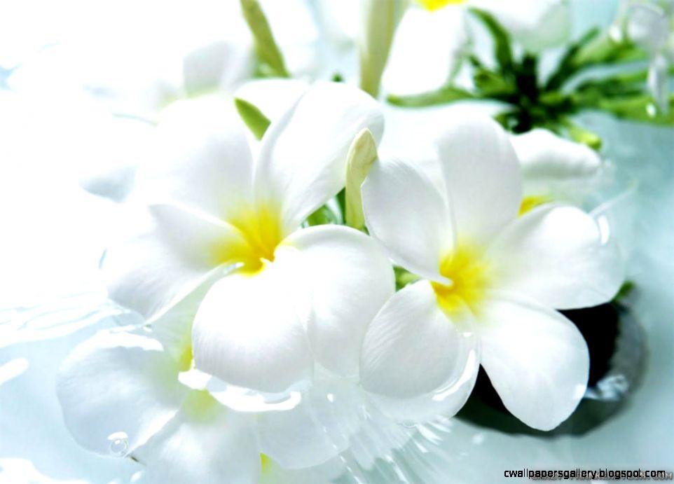 Beautiful White Flowers wallpaper  1024x768  22610