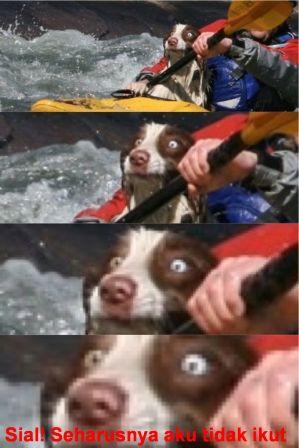 foto lucu binatang