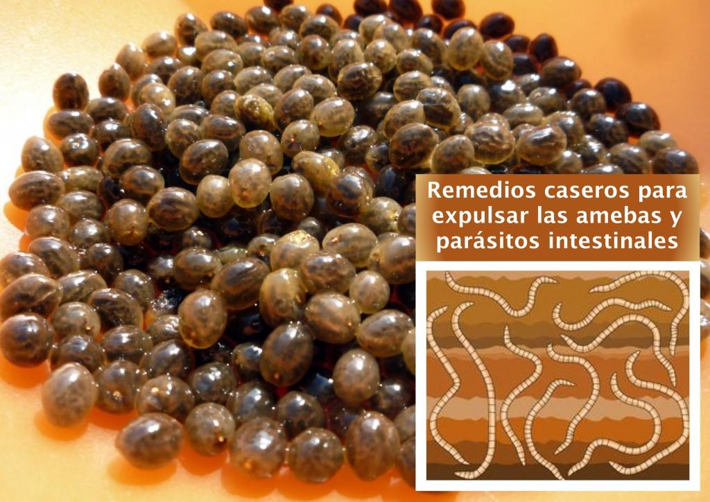 Los parásitos intestinales de la foto i