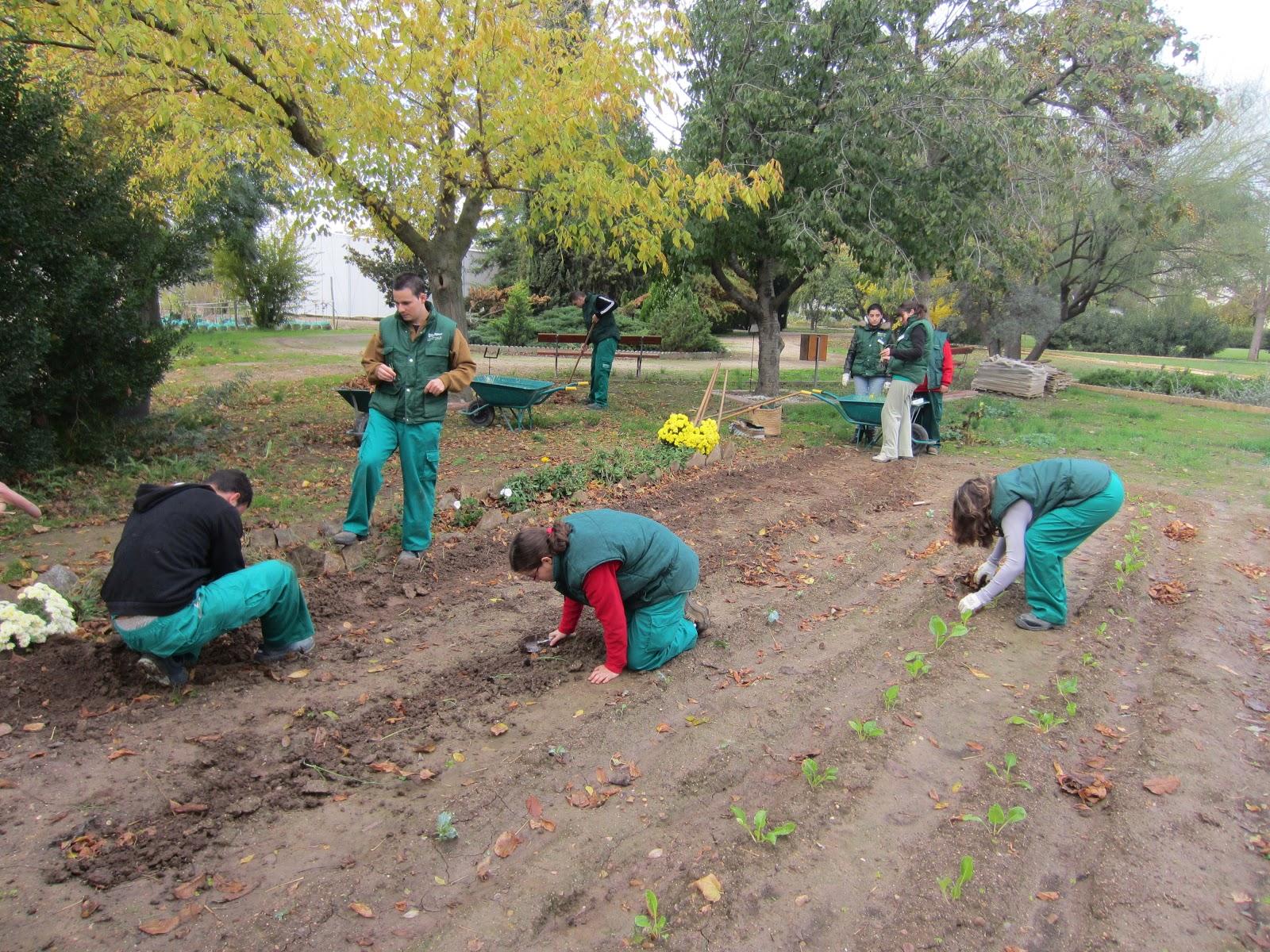 Escuela municipal de jardiner a el pinar el huerto en for Escuela de jardineria