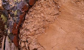 oregon forests, Heidi Utz photography