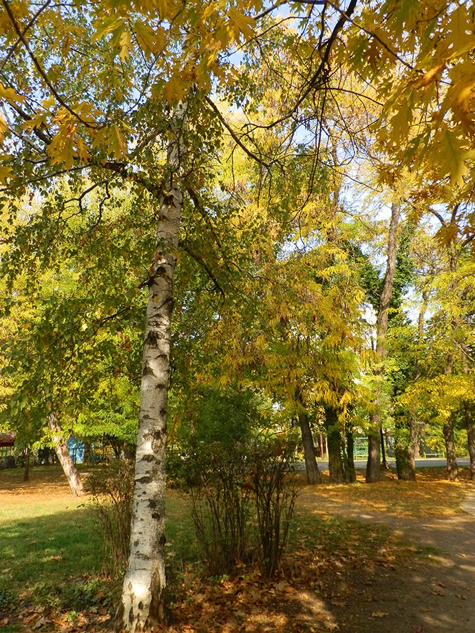 Autumn in the park, yellow leaves