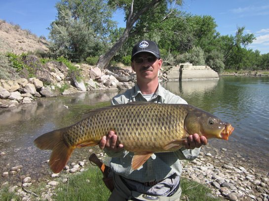 Arkansas river tailwater fly fishing report for Fishing in arkansas
