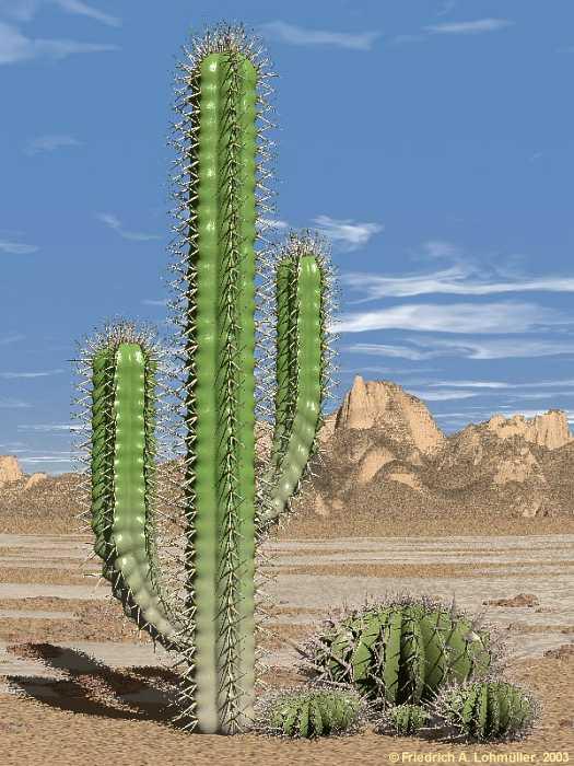 Kaktus melakukan fotosintesis pada organ 34