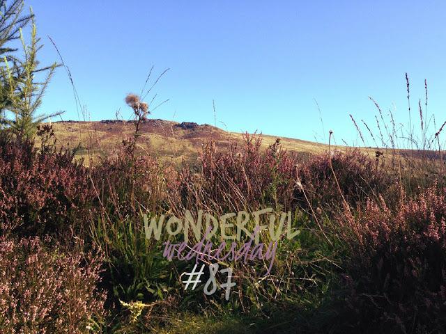 Wonderful Wednesday #87