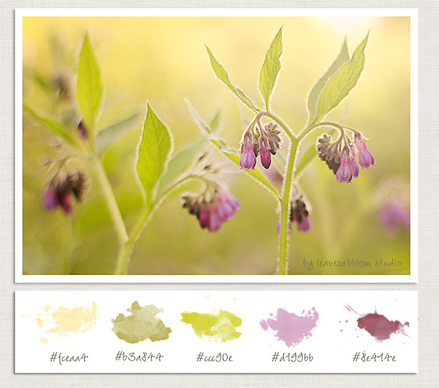 fix colour casts - Wild Native Perthshire Comfrey Flowers for ColorMe Weekly - Symphytum officinale